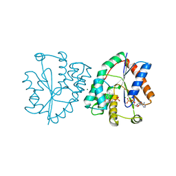 Molmil generated image of 1nn3