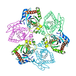 Molmil generated image of 1ou4