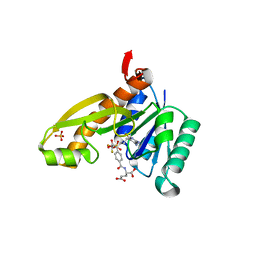 Molmil generated image of 1rbq