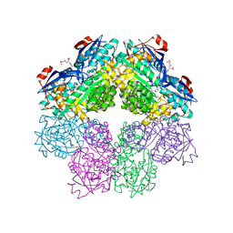 Molmil generated image of 1sjd