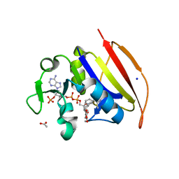 Molmil generated image of 6dds